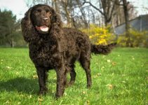 5 Best Dog Muzzles For American Water Spaniels