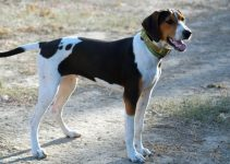 5 Best Dog Muzzles For Treeing Walker Coonhounds