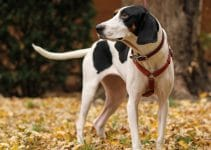 5 Best Dog Toys For Treeing Walker Coonhounds
