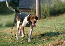 5 Best Puppy Foods For Treeing Walker Coonhounds