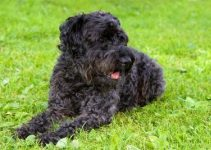 Best Dog Beds For Kerry Blue Terriers