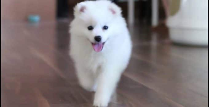 Best Dog Beds For American Eskimo Dogs