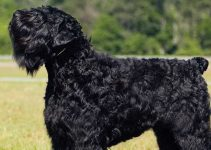 Best Dog Beds For Black Russian Terriers