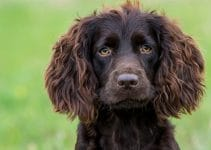 Best Dog Beds For Boykin Spaniels