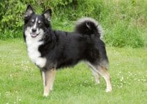 Best Dog Beds For Icelandic Sheepdogs