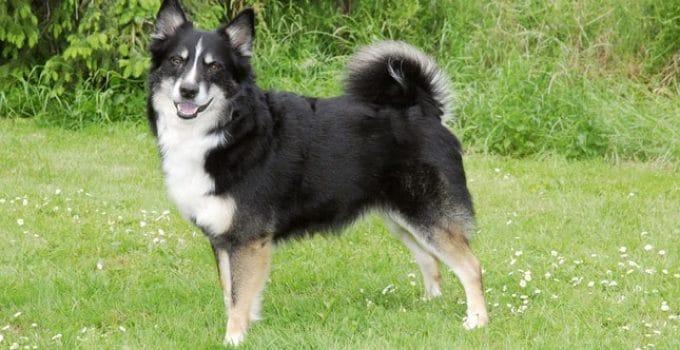 Best Dog Beds For Icelandic Sheepdogs