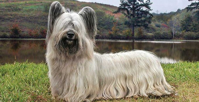 Best Dog Beds For Skye Terriers