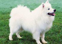 Best Dog Brushes For American Eskimo Dogs