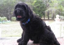 Best Dog Brushes For Black Russian Terriers