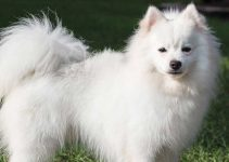 Best Dog Collars For American Eskimo Dogs