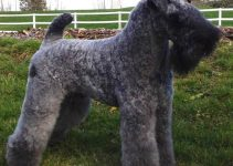 5 Best Dog Collars for Kerry Blue Terriers (Reviews Updated 2021)