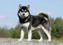5 Best Dog Crates for Alaskan Malamutes (Reviews Updated 2021)