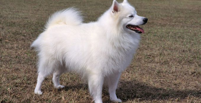 Best Dog Crates For American Eskimo Dogs
