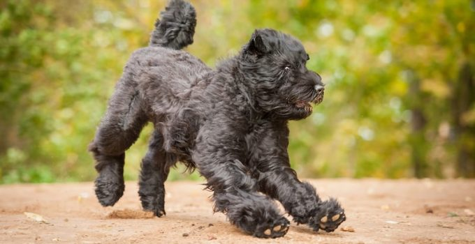 Best Dog Crates For Black Russian Terriers