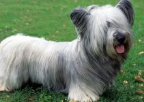 Best Dog Crates For Skye Terriers