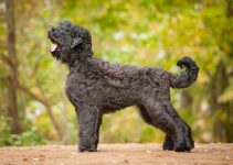 Best Dog Foods For Black Russian Terriers