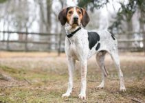 Best Dog Shampoos For American Foxhounds