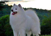 Best Dog Shampoos For American Eskimo Dogs