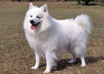 5 Best Dog Toys for American Eskimo Dogs (Reviews Updated 2021)
