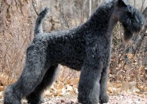 Best Dog Toys For Kerry Blue Terriers