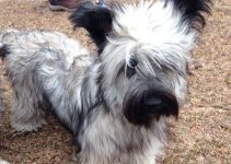 5 Best Puppy Foods for Skye Terriers (Reviews Updated 2021)