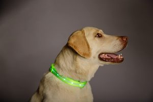 Blazin' Safety Led Usb Rechargeable Dog Collar