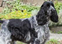5 Best Dog Beds for English Cocker Spaniels (Reviews Updated 2021)