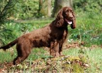 5 Best Dog Beds for Field Spaniels (Reviews Updated 2021)