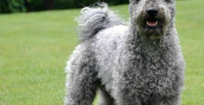 Best Dog Beds For Pumi