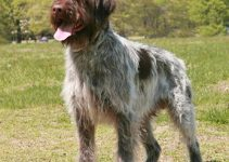 5 Best Dog Beds for Wirehaired Pointing Griffons (Reviews Updated 2021)