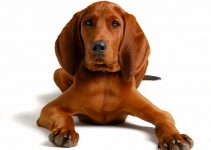 5 Best Dog Brushes for Redbone Coonhounds (Reviews Updated 2021)
