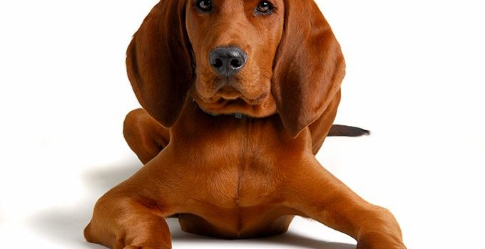 Best Dog Brushes For Redbone Coonhounds