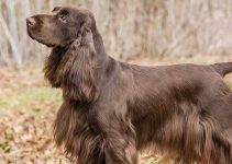 5 Best Dog Collars for Field Spaniels (Reviews Updated 2021)