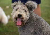 5 Best Dog Collars for Pumi (Reviews Updated 2021)