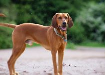 Best Dog Collars For Redbone Coonhounds