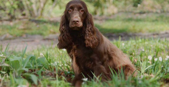 Best Dog Crates For Field Spaniels
