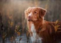 Best Dog Crates For Nova Scotia Duck Tolling Retrievers