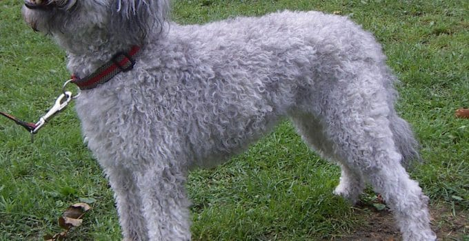 Best Dog Crates For Pumi