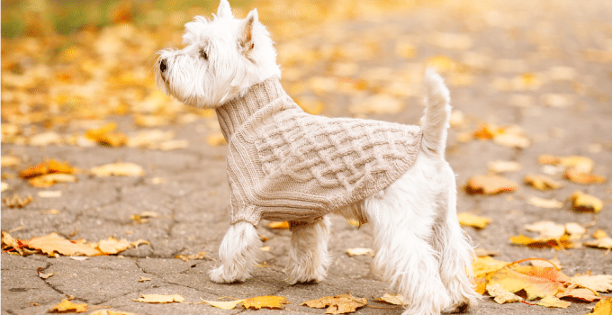 Best Dog Crates For West Highland White Terriers