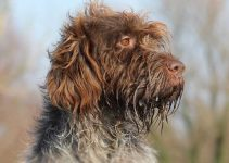 5 Best Dog Crates for Wirehaired Pointing Griffons (Reviews Updated 2021)