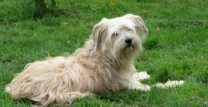 Best Dog Foods For Pyrenean Shepherds