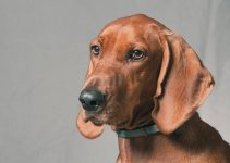 5 Best Dog Harnesses for Redbone Coonhounds (Reviews Updated 2021)