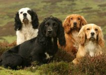 Best Dog Muzzles For English Cocker Spaniels