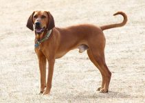 Best Dog Muzzles For Redbone Coonhounds