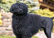 5 Best Dog Toys for Portuguese Water Dogs (Reviews Updated 2021)
