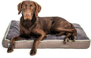 Better World Pets Orthopedic Pillow Dog Bed
