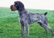 5 Best Dog Beds for German Wirehaired Pointers (Reviews Updated 2021)