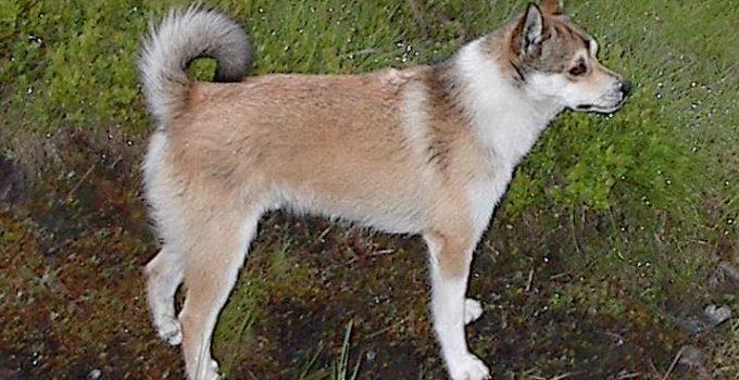 Best Dog Beds For Norwegian Lundehunds