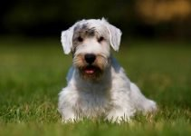 5 Best Dog Beds for Sealyham Terriers (Reviews Updated 2021)