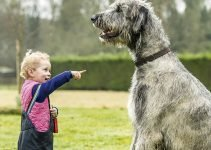 5 Best Dog Collars for Irish Wolfhounds (Reviews Updated 2021)